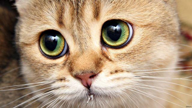 Эти видео про котиков стали хитом Сети! Невозможно не смеяться
